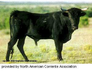 Cattle Raising